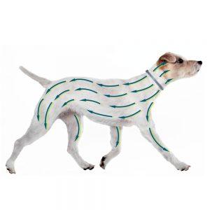 test accessoire chien collier antiparasite seresto