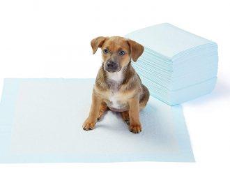 Tapis éducateur chien : Guide d'Achat avec comparatif, test et avis 2019