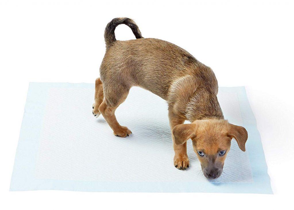 test accessoire chien tapis éducateur propreté amazon basics
